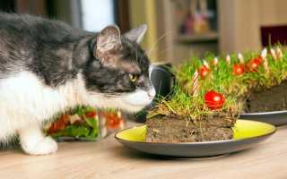 Почему кот ест землю