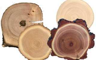 Какая порода дерева самая твердая