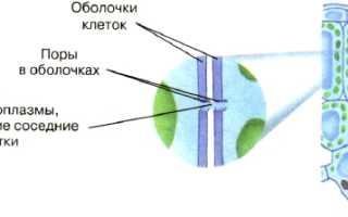 Как поступают вещества в живую клетку
