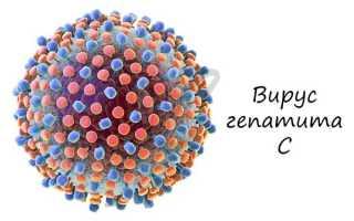 Где размножаются вирусы