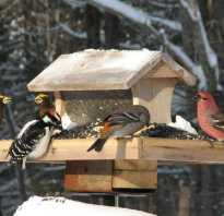 Как помочь животным зимой