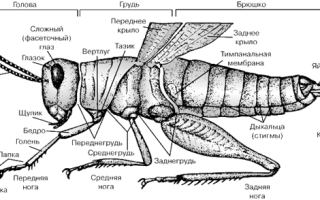 Что это за насекомое
