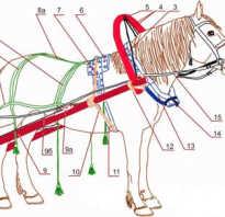Как запрягать лошадь