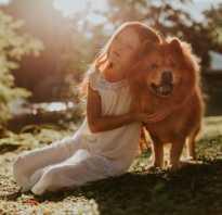 Как уговорить родителей на собаку