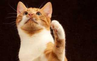Сколько кот может прожить без воды