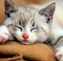 Почему котики такие милые