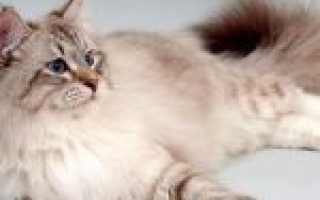 Как отучить кошку гадить на ковер