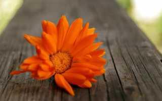 Что означает оранжевый цвет в психологии