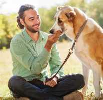 Как собака выбирает хозяина