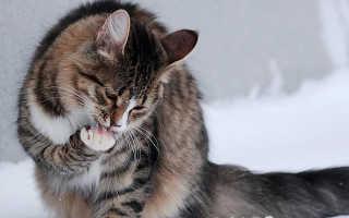 Что делать если кота рвёт