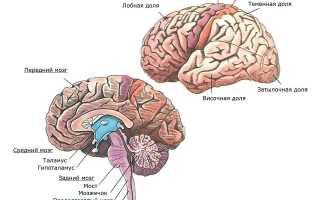 От чего бывает рак мозга