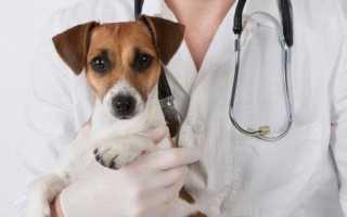 Зачем кастрируют собак