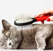 Как вычесать кота