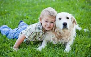 Какие собаки любят детей