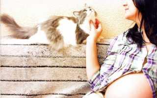 Можно ли беременным общаться с кошками