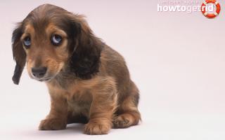 Как наказывать собаку за непослушание