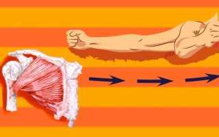 Как эффективно накачать грудные мышцы
