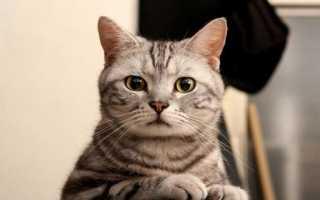 Есть ли память у котов