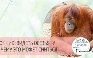 К чему снится обезьянка