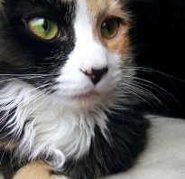 Почему у котенка сухой нос