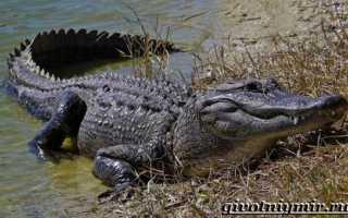Каким видам животных относится крокодил