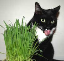 Почему коты едят траву