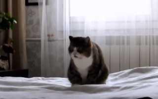Почему кот ссыт на кровать