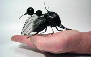Редкие насекомые мира
