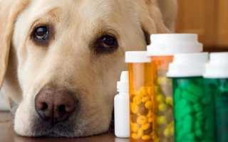 Как лечить цистит у собак