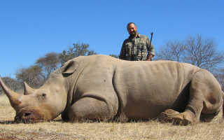Зачем носорогу рог