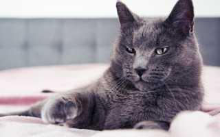 Почему у кошки пропал голос