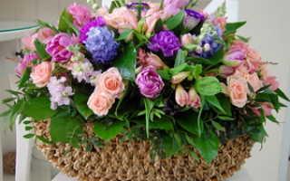 Какие бывают виды цветов