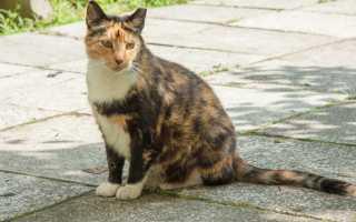 Метят ли кошки территорию