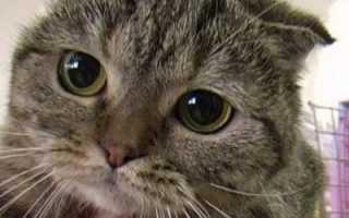 Почему котёнок дрожит
