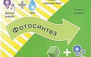 Чем хемосинтез отличается от фотосинтеза