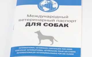 Как сделать паспорт собаке
