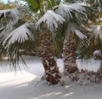 Бывает ли снег в Африке