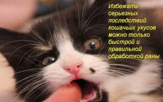Укусила кошка рука опухла что делать