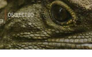 Почему люди верят в рептилоидов
