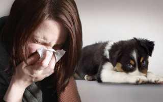 Какие породы собак не вызывают аллергию